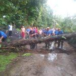 Pohon Enau yang tumbang sempat membuat arus lalin macet di Tulang Nyuh,Tegak