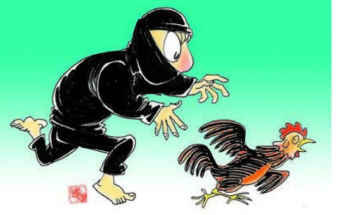 Ilustrasi pencurian ayam (gambar : Borneo24)